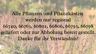 Regional liefer- und abholbare Pflanzen