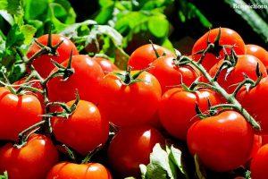 tomate-previa